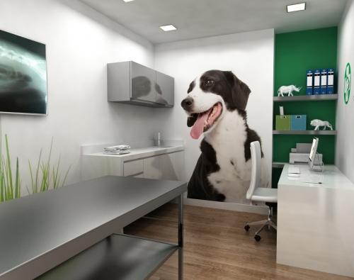 gabinete clínica veterinaria