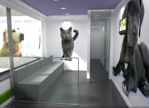 sala clínica veterinaria