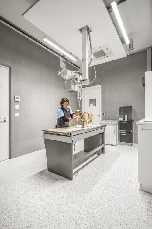 sala rx clínica veterinaria